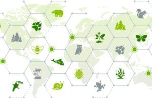 5 claves para defender la biodiversidad desde la gestión de residuos